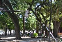 Prefeitura realiza mais de 600 podas em dois meses