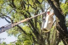 Prefeitura destinará árvores suprimidas para a Santa Casa