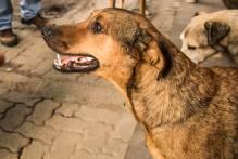 Combate aos maus-tratos de animais ganha força na cidade
