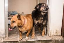 Comupa arrecada doações de ração para protetores de animais do município