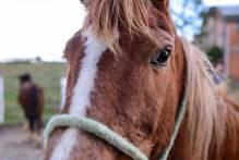 6ª Adoção de Cavalos ocorre na próxima terça-feira