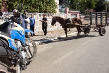 Blitz de combate a maus-tratos em cavalos aborda 15 carroças