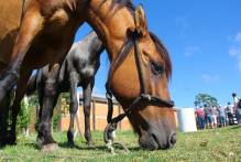 Sexta tem doação de cavalos na Hospedaria da Prefeitura