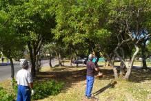 Prefeitura faz podas e supressões de árvores em áreas públicas de diversos bairros
