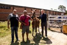 Oito cavalos da Hospedaria de Grandes Animais ganham um novo lar