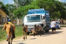Prefeitura recolhe sete cavalos em três dias