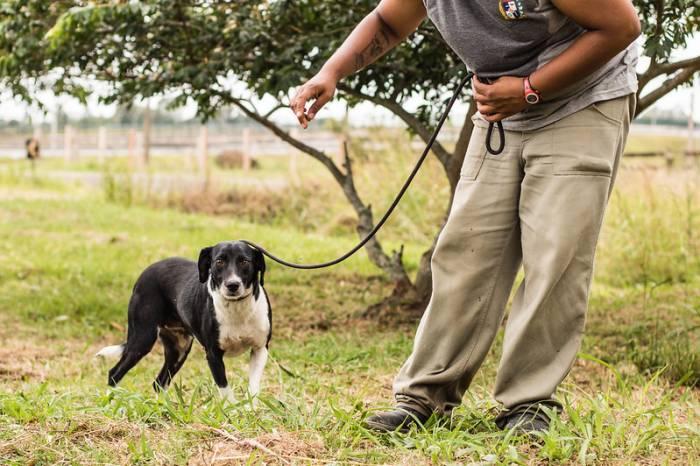 Canil e Gatil municipais têm 49 animais à espera de um lar